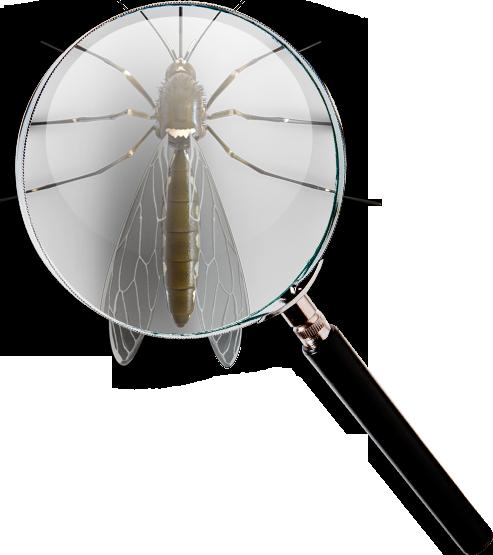 Pests Finder