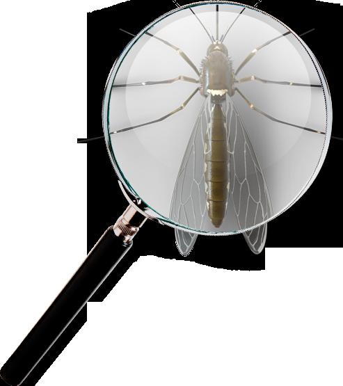 شناسایی حشرات